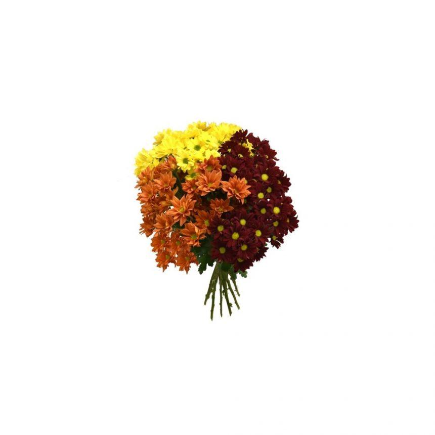 Krysanthemum