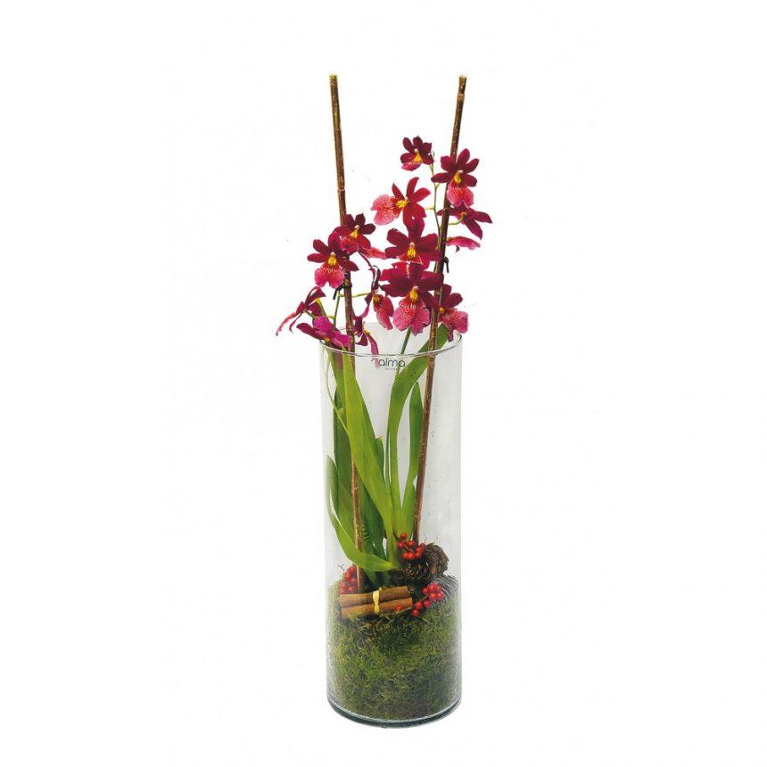 Röd orkidé i hög vas