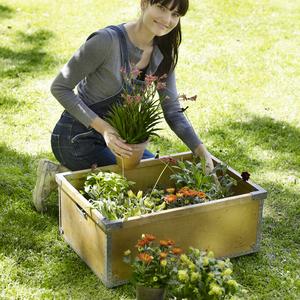 Allmänna trädgårdstips