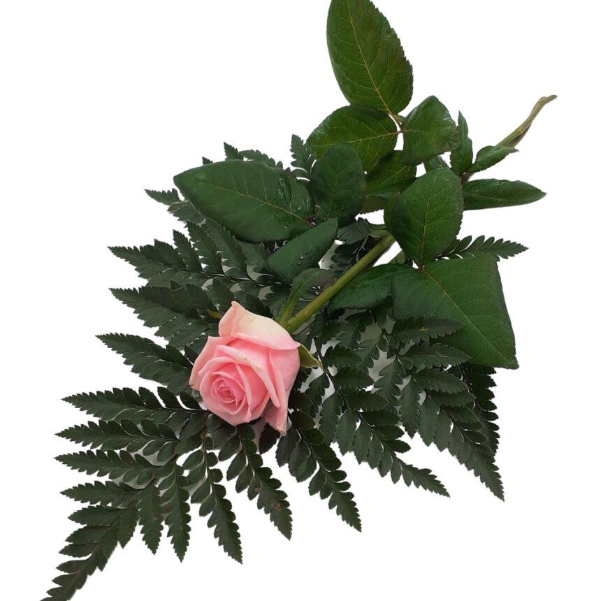 Handbukett rosa ros hos Bellis blomsterhandel.